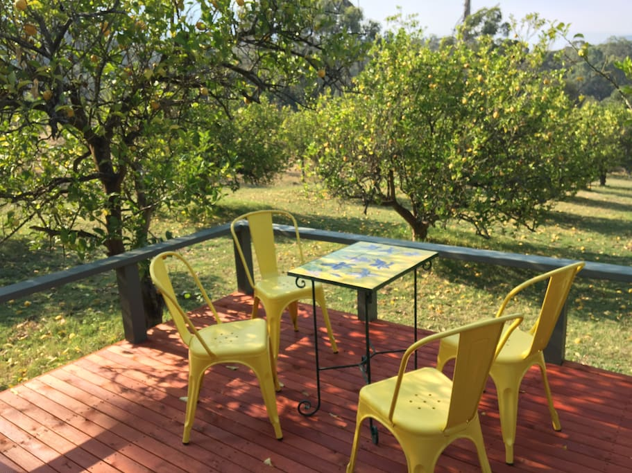 Back deck in the lemon orchard