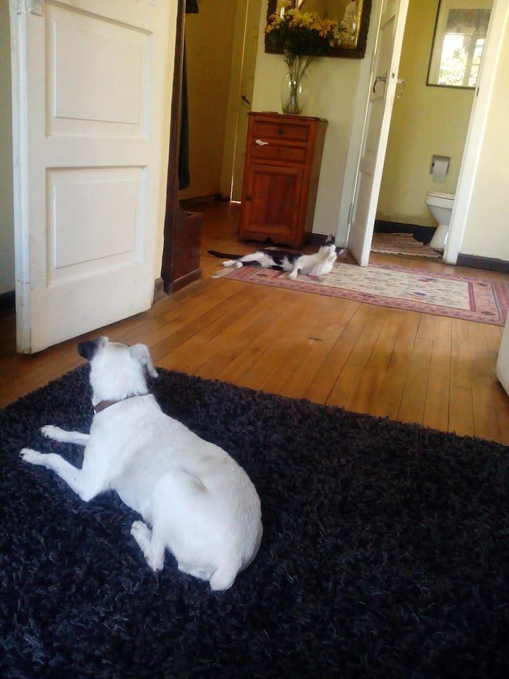 la perrita blanca y el gato ya no están en la casa ahora sólo está Dominga