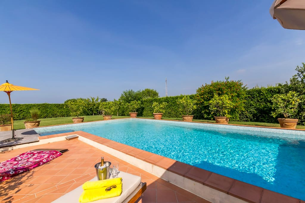 Pool surrounded  by beautiful lemons tree