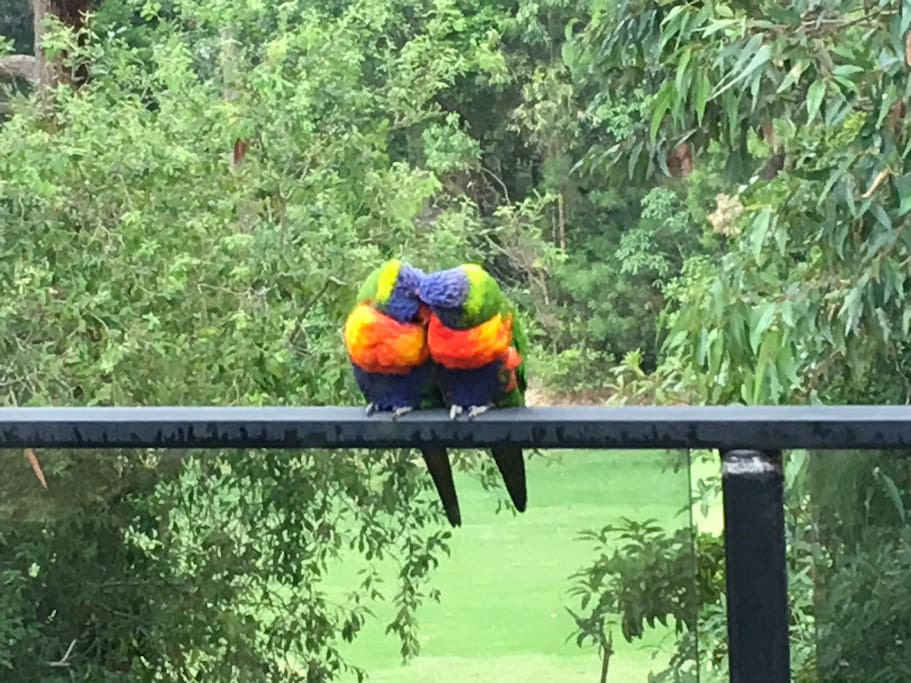These two cheeky lorikeets sit on our hands when we feed them.