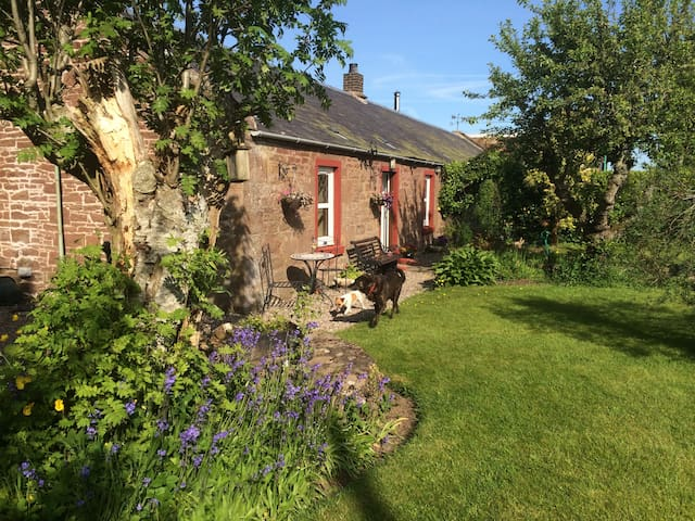 Period cottage in the Angus glens - Dogs welcome - Tannadice - Wikt i opierunek