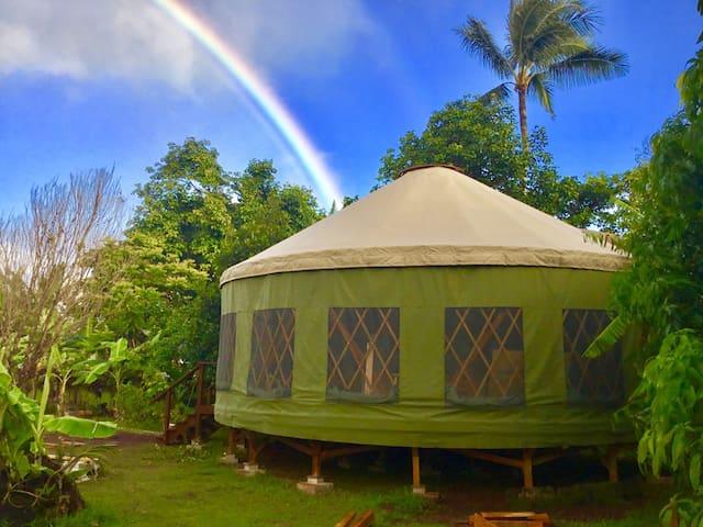 Tree Loving Yurt