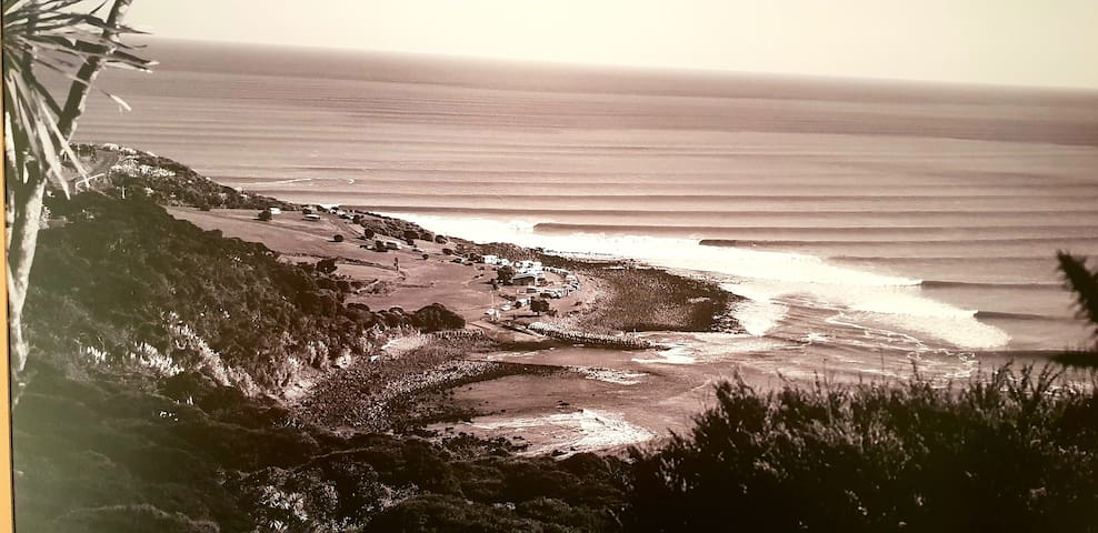 WHALE BAY'S SURF MECA