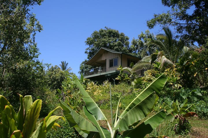 Private Jungle Canopy Cottage; Natural Pools!