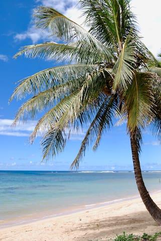 Joy's Kauai Guidebook