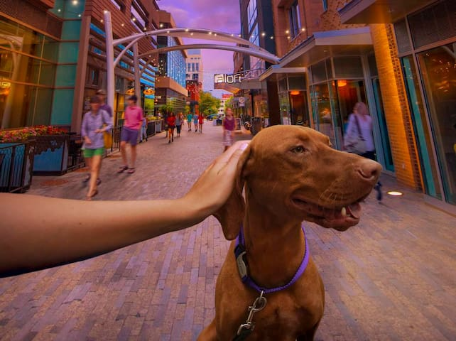 Dog Friendly Greenville Guide