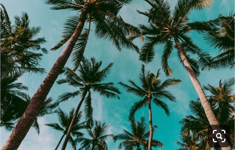 Coconut Casita Guidebook to Vero and area....Live like a Local!