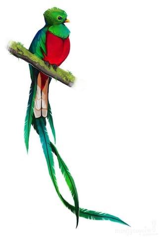 Quetzal Loft Guide