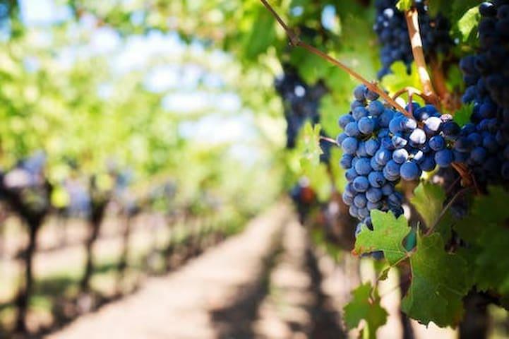 Temecula Wine Country Guidebook by Villa Toscana