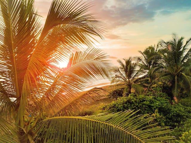 Guidebook for Playa Avellanas