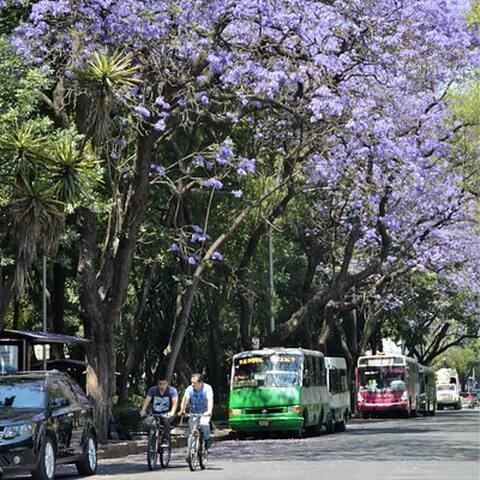 Pia´s favorite Mexico City