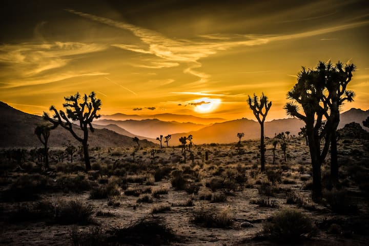 Guidebook for Joshua Tree, Palm Springs and other high desert cities.