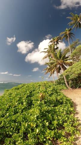 Molokai guidebook