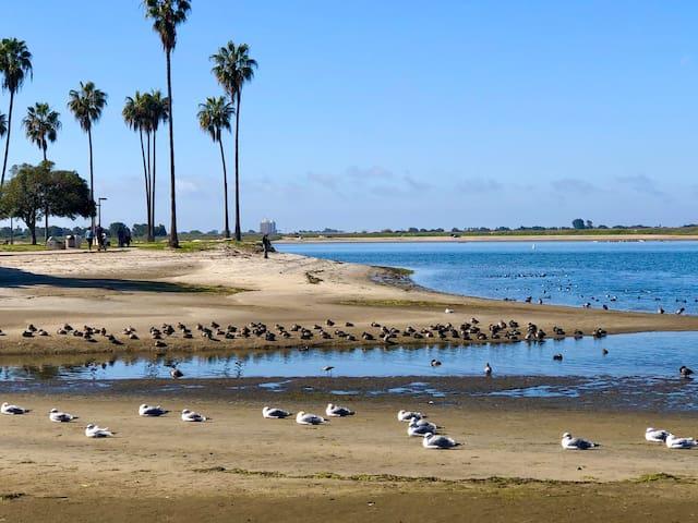 Guidebook ~ San Diego Writers Pad