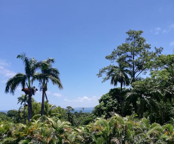 Somewhere between the trees and the sea is Suva City