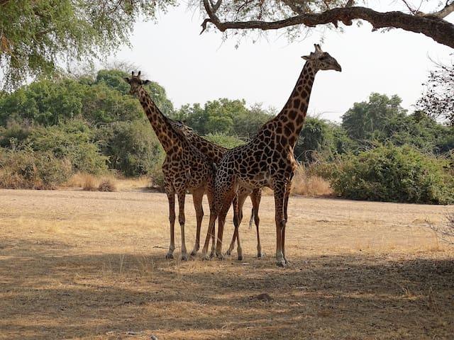 Places to Visit in Lusaka
