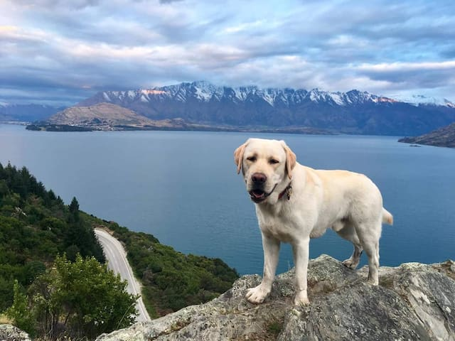 Alfy's guide to Queenstown