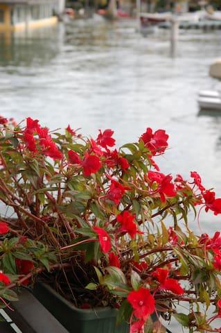 A spasso per il lago Maggiore in compagnia di Alice