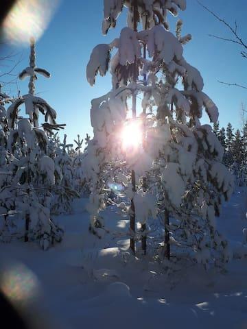 Löydä Kankaanpää