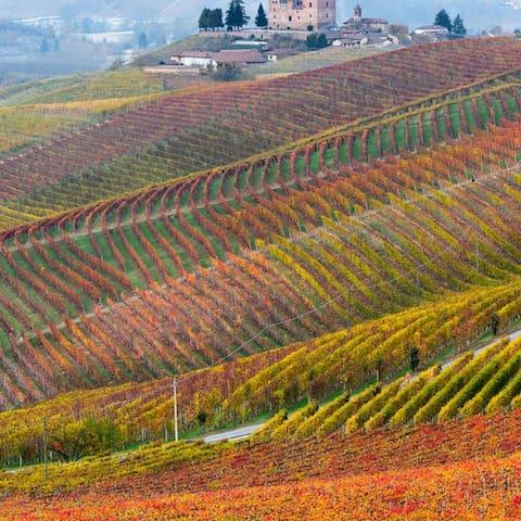 Beautiful Wine Country - Windsor