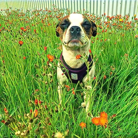 Best Places to Walk Your Dog guidebook
