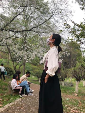 2020长沙春天游||湖南省植物园的樱花🌸