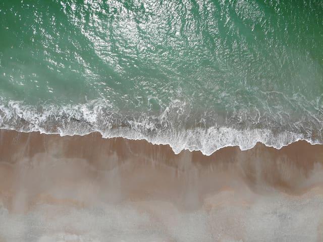 The Endless Summer Carolina Beach Guidebook