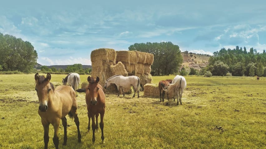 Segovia Sur. Caballar. Guía indispensable
