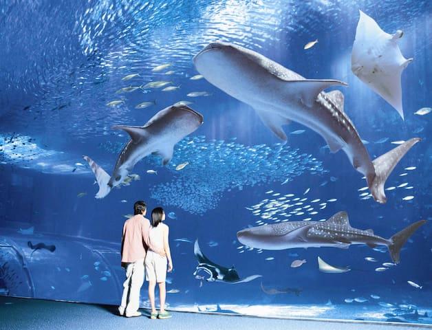ゆったり沖縄時間を満喫!水族館・ビーチ・離島・レジャースポット・世界遺産にアクセス抜群のもとぶ周辺ガイド