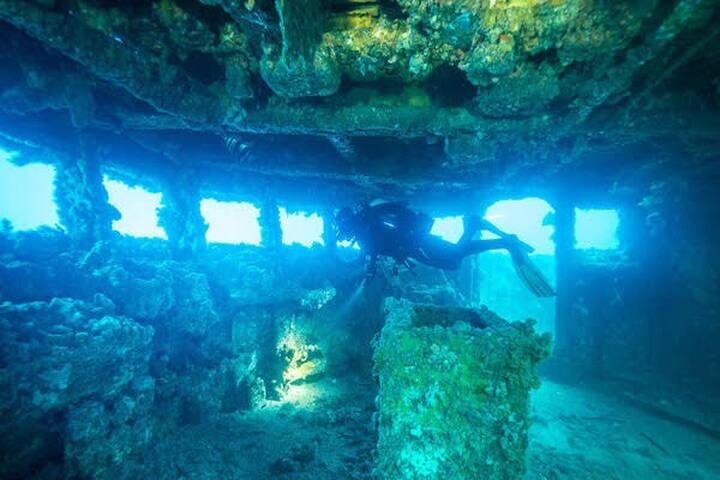 Diving Wirrina Cove