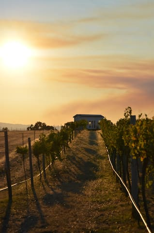 Hounds Run Vineyard Guidebook