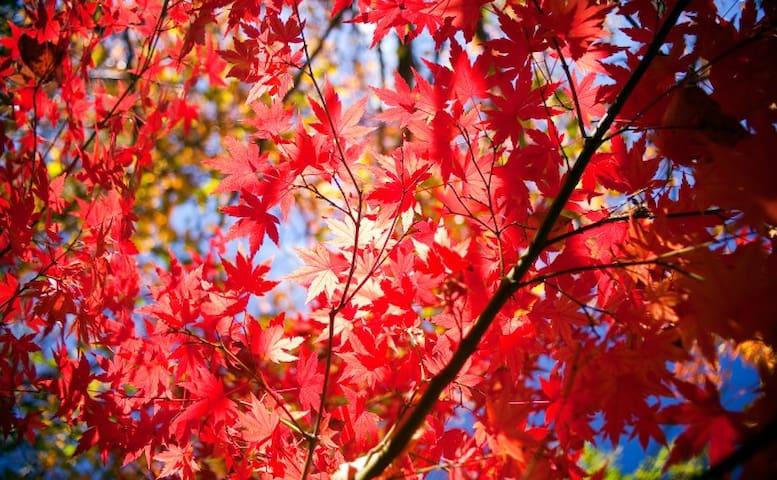 Red Leaf Cottage Local Tips