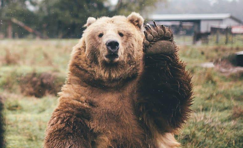Big Bear Recreation Guide