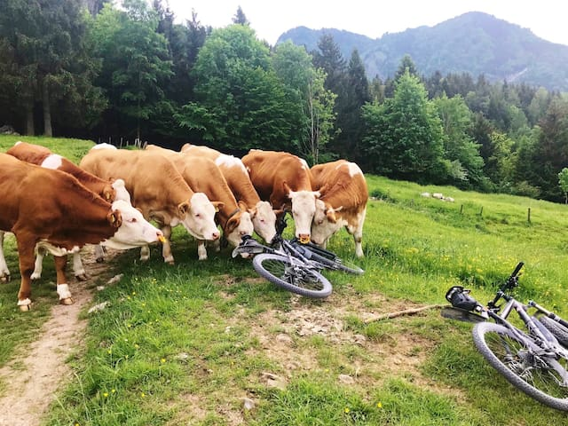 Mountain Bike Runde zum Tatzelwurm