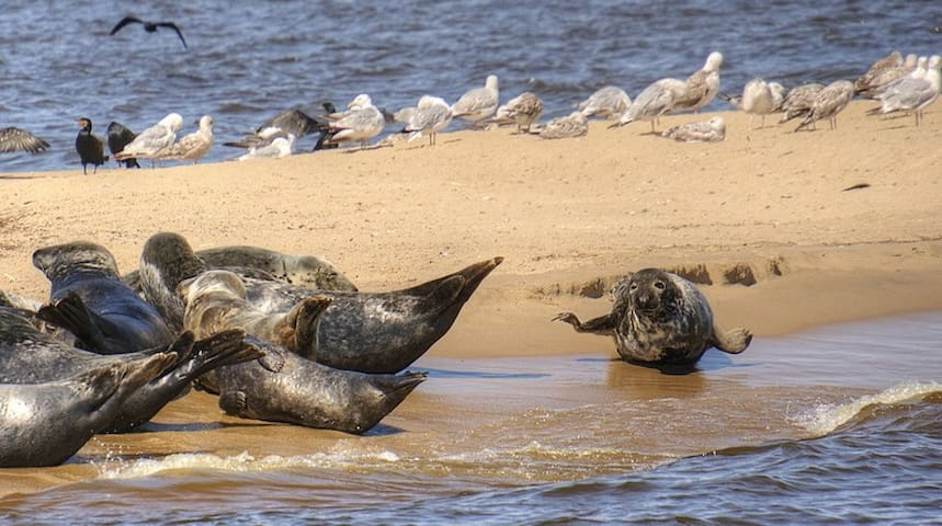Świbno - rejs na foki