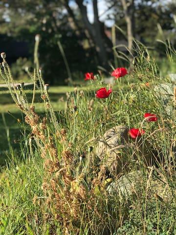 Guidebog, fif og gode råd til en dejlig ferie i Tornby