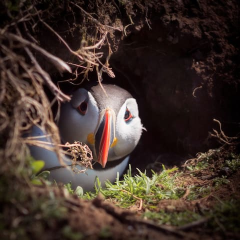 The Puffin Burrow Out and About Guide