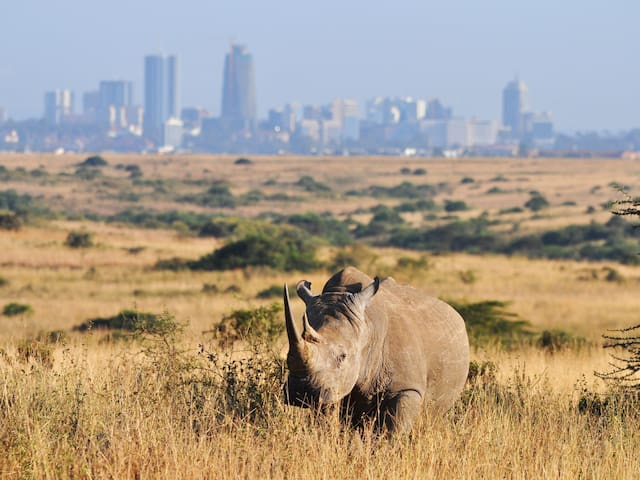Lisa's Nairobi Guidebook