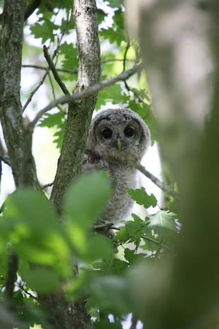 Tawny Owl Cottage Murton Guidebook