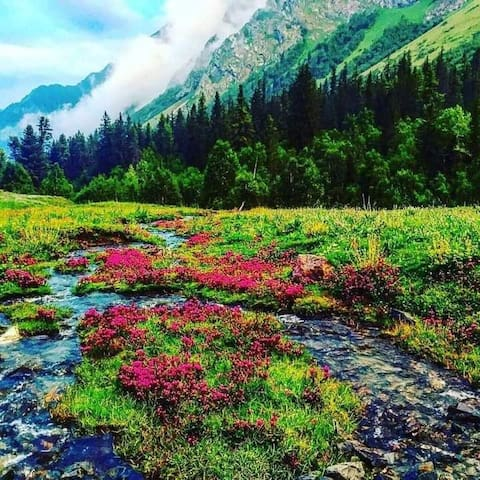 Viney's Guidebook for himachal Traveling Mandatory for Travellers