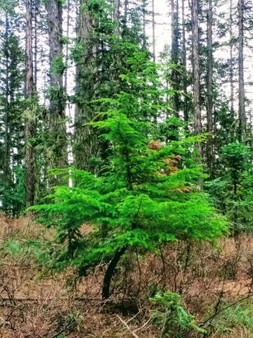Bent Tree Campground Guidebook