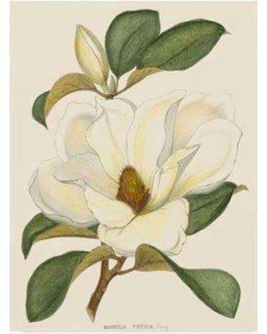 Magnolia House's Guidebook