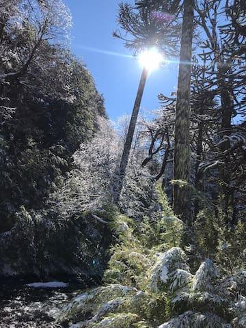 Panoramas Infinitos en Malalcahuello