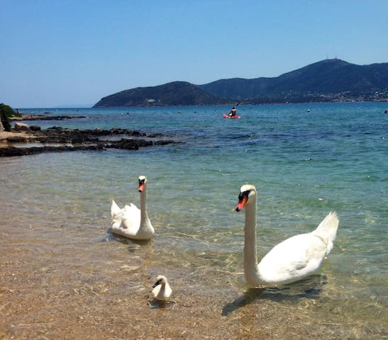 ''This is Porto Rafti'' Ταξιδιωτικός οδηγός του/της Aimilia