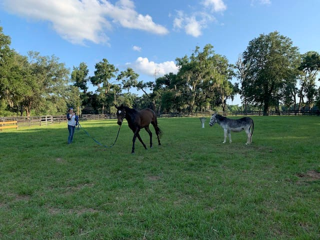 Picturesque Farm Stay Close to World Equestrian Center