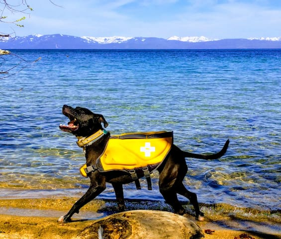 Bodie's North Tahoe Guide
