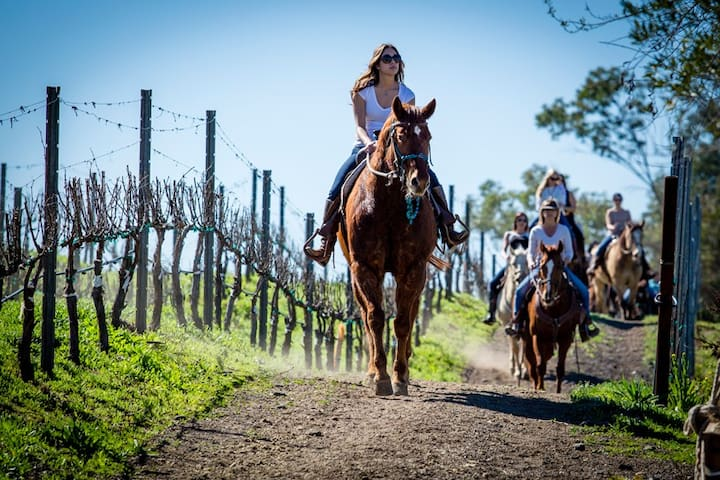 Wine Country Horse Trails by Horseback - Book a tour in Temecula - 25 min.