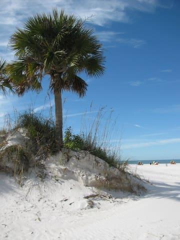 Clearwater Beach guidebook