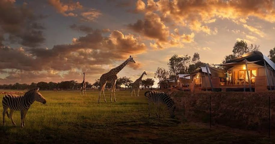 Dubbo Western Plains Zoo