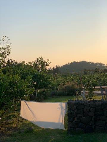 Guidebook for Hangyeong-myeon, Jeju-si